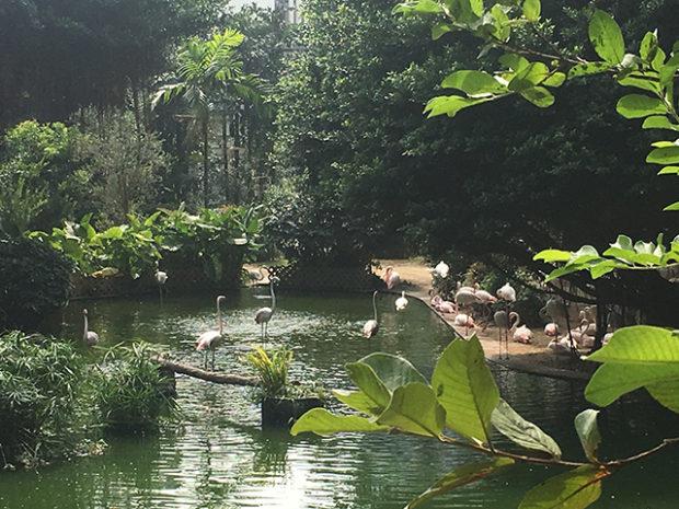 九龍公園(香港)