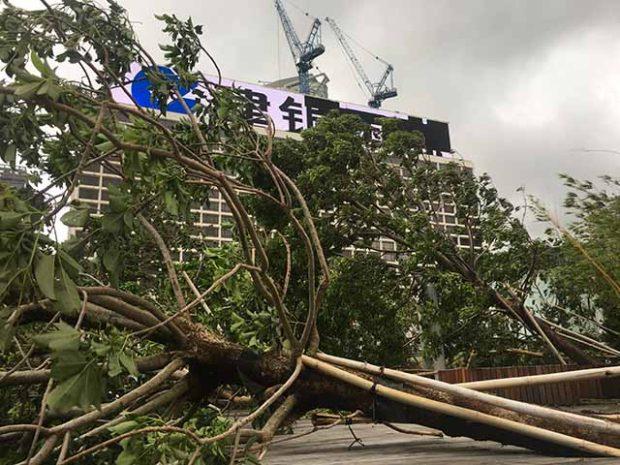 香港の台風とマンクット(山竹)について